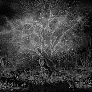 Victor Marx flera meter höga Trädet.