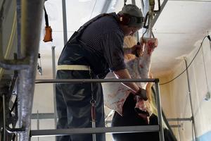 Cirka 20 djur i veckan slaktas vid Gubbgården, vilket medför att de har höga kostnader för köttbesiktning.