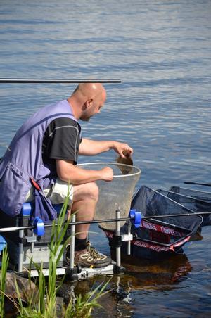 Patrik Dahlström håvar in sin tionde brax på en halvtimme och lägger ner den i buren där fisken hålls levande för att släppas ut i sjön efter invägningen.