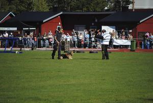 Bilden är tagen på Barro med förare vid en uppvisning under Polishunds-SM i Söderhamn. Hunden bevakar en person tagits genom bett.