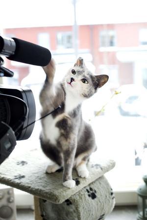 Att Liza, Årets lussekatt 2012, är både nyfiken och lekfull syntes tydligt när Arbetarbladets webbredaktion skulle filma henne.