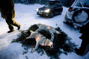EU vill mentaltesta svenska jägarkåren. Förslaget kan träda i kraft redan vid årsskiftet och berör Sveriges minst 600000 jägare.