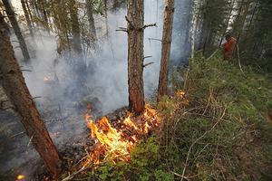 Enligt SMHI kommer lukten med största sannolikhet från den stora skogsbranden i Sala.
