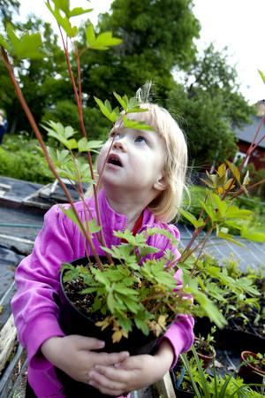 Elina Ostonen, snart tre år, var yngst bland alla blomsterälskare.
