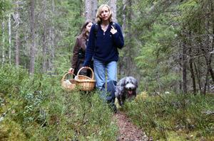 Längst fram Mille Rådjursöga från Sundsvall och bakom Yvonne Malm från Sörberge som letade spännande svampar i Mjällådalsskogen.