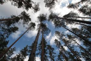 En skogspromenad, vände kameran uppåt och detta blev resultatet.