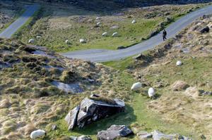 Betande får bidrar till stämningen i Gap of Dunloe.