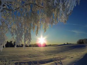 Rimfrosttäckt träd i motljus. Foto: Maria Gärdvall