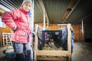 Elsa Grenholm är rehabiliterare för skadat vilt.