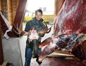 Oxen hade åtta taggar och hornet ska hängas upp i pojkrummet i Bensjö.