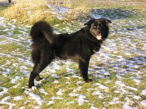 Hunden Sally, tio år, tvingades avlivas efter att ha fått i sig råttgift.