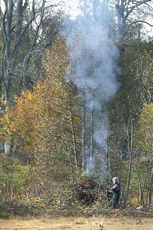 Vindstilla. Perfekt dag för röjning av sly. Rökpelaren stiger rakt upp.