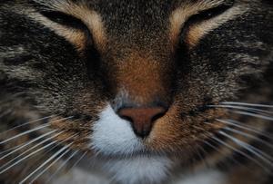En riktig närbild på våran vackra, älskade katt.