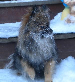 Det är inte så lätt att vara liten när det är mycket snö....
