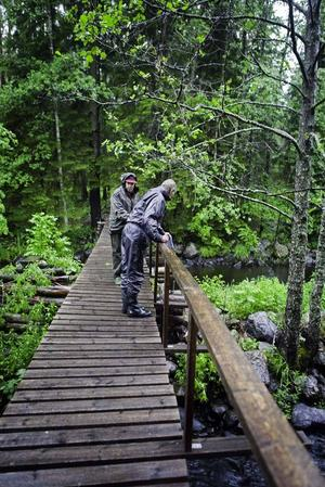 Ledarna, Åke Malmqvist och Ove Lennström vid bron över Testeboån in till reservatet.