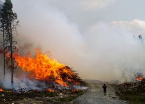 """Det dröjde inte länge innan branden hade lärt sig att hoppa över vägar. Senare skulle den även ta sig över sjöar, t.ex. så """"hoppade"""" branden över sjön Snyten som troddes kunna utgöra en naturlig begränsningslinje. Foto: Alexandra Sannemalm"""