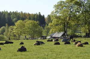 Satsning på fler bostäder är ett första steg till en levande landsbygd, skriver Ulrika Hedlund i Henninge.