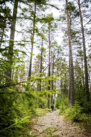 Elisabeth Nilsson brinner för naturen i Ljustorp med omnejd. Hon trivs bland de gamla tallarna i  Lögdöparken.