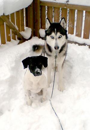 Putte och Frasse älskar att vara ute i snön.