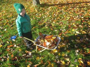 En härlig höstbild på mitt barnbarn Lucas Ekblom som med lust och glädje tar tag i lövräfsningen.