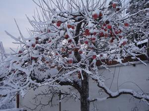 Vinterfrukr hos Evert