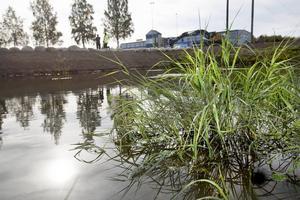 Naturen sköter reningen genom växter och mikroorganismer.