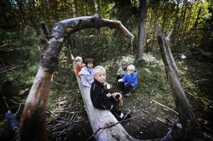 Pojkarna från klass 1B trotsade myrorna och åt sina smörgåsar på ett nedfällt träd.