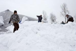 Många frivilliga hjälpte till att skotta tak på gården. Linda Hassel hjälper till att skotta taket över gödselbrunnen.