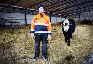 Lars-Erik Hillbom har sina kor just utanför Gävle. Han tror inte att marginalerna som småskaliga bruk har skulle klara av någon extra skatt.