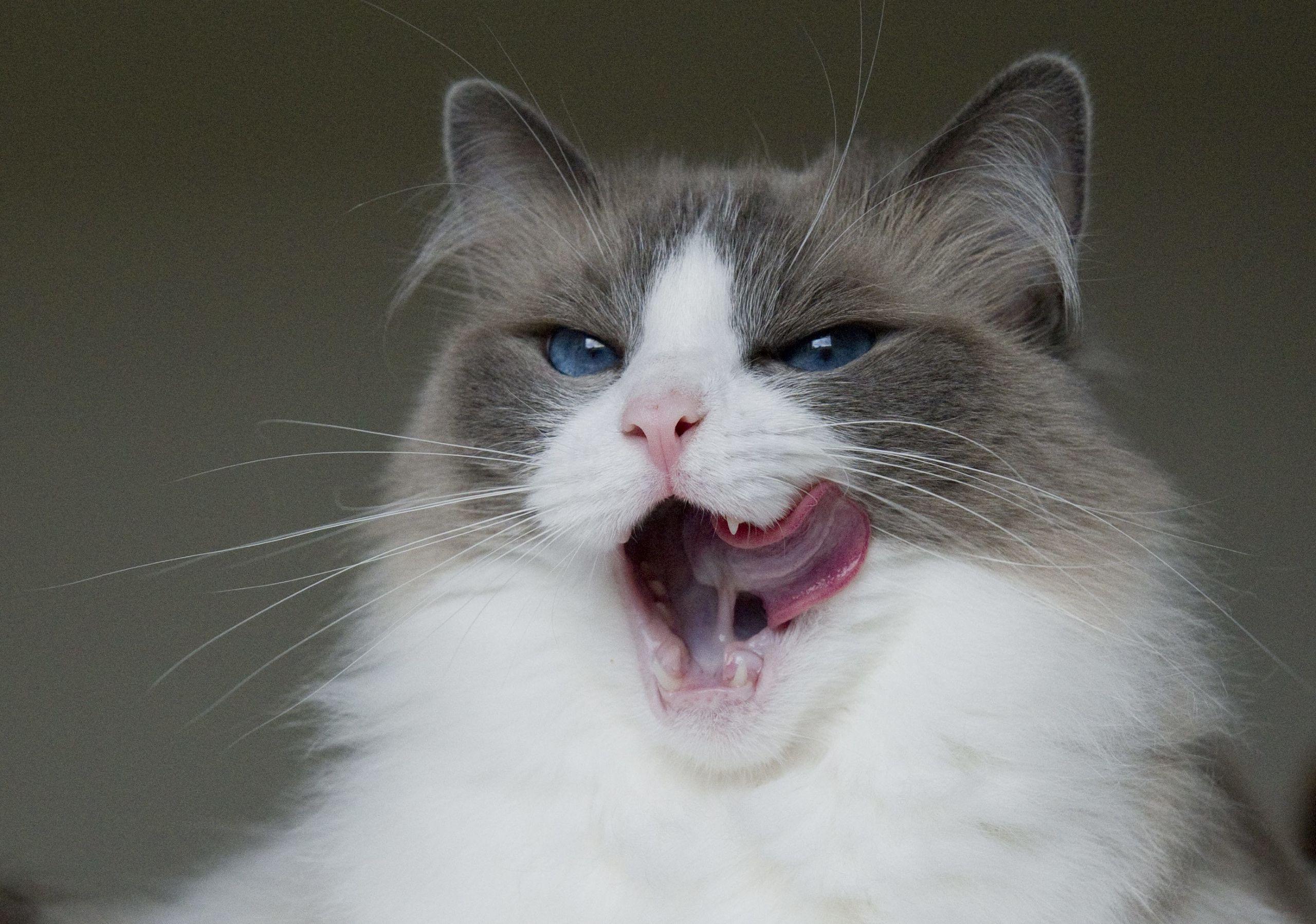 Stormig debatt pa kattens dag