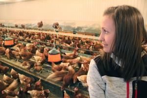 Frida Säfström driver äggeriet i Vålsjö och berättar att bruna höns är mer sociala och nyfikna än vita höns.