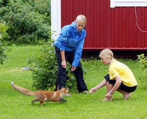 Systrarna Maria och Matilda Andersson hade en rolig kompis på gården sommaren 2005. När de ropade SIGGE allt vad de orkade mot skogsbrynet kom Sigge räv springande. Då visste han att det vankades korv.