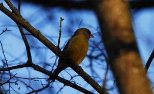 Var på promenad och fotade och lyckade fåga denna underbara bild.