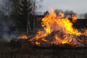Runt 250 personer kom till hembygdsgården i Ljusdal för att fira in våren.