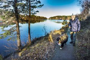 Johannes Nordvall under sin dagliga promenad med berner sennenhunden Karo.