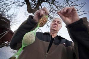 Grundtips. Nötter och talgbollar ingår i basutrustningen för den som vill få fler fåglar i trädgården tipsar Bjarne Eriksson. Foto: Tony Persson