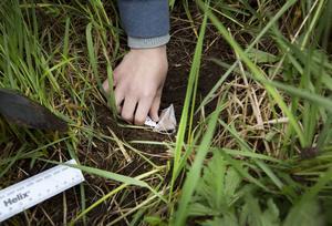 Forskare vid Umeå Universitet tar hjälp av skolelever för att ta reda på hur jorden bryter ner växtmaterial på olika platser runt om i Sverige.