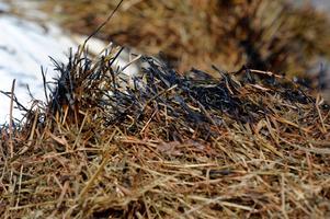 Flera gräsbränder har brutit ut i Örebro den senaste veckan.
