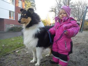 Min dotter Maja är 2 år och Hailey är en collie på ca. 7 mån. Maja gillar djur och är duktig med dem för sin ålder. Hon brukar bli arg om hon inte får hålla i någon av våra hundar när vi är på promenad!