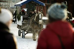 Ardennerhästen Rocky från Puttbo gård bidrar med julstämning och erbjuder marknadsbesökarna skjuts i vagnen.