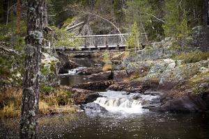 I Voxnans biflöden finns den känsliga flodpärlmusslan som kan bli 300 år gammal.