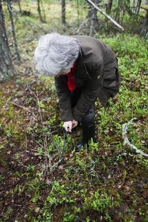 Inventerarna använder sig av speciella pinnar som de sticker ned i marken för att se vad som döljer sig under jorden.