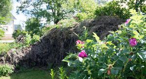 Muren har Göran Greider byggt upp av grenar och överblivet papper – böcker och rapporter. Återvinning och kompostering som ska bli en vertikal trädgård.