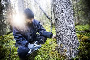 Ralf Lundmark hittar skogsområden med mycket höga naturvärden, men också de som inte riktigt håller måttet.