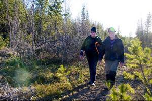 Eftersom Peter Persson och Sven-Göran Persson spenderade många sommarlov med att plantera plant kan de i framtiden komma att bli tal om att de får i uppgift att gallra fler skogar som de varit med att plantera.