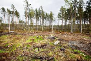 Här, i ett område strax öster om Storsjön, är det tänkt att gruvan ska ligga.