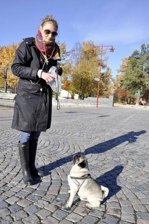 Mopsen Wilmer är kanske den gladaste mopsen i stan. Matte Emelie Berglund har hundgott i fickan – när han förtjänar det.