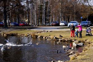 Att mata fåglar vid Skantzsjön en solig Marsdag,det är ett vårtecken som heter duga.