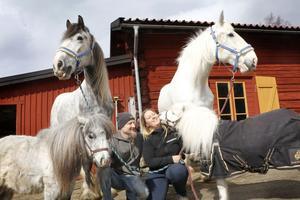 De 28 hästarna på gården tillhör ett tiotal hästraser. De största, shirehästarna, och de minsta, minishettisarna, är också med på uppvisningar och uppträder tillsammans. Här syns Shiregårdens Merlin, Shiregårdens Aragorn, Vildängens Fairybell (Bell) och Vildängens once in a blue moon (Indigo) tillsammans med Tobias och Mikaela Janolsgården.