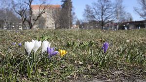 I Vilhelminaparken börjar tecken på att varmare tider är på väg nu att visa sig.